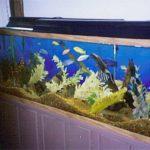 aquariumnice1