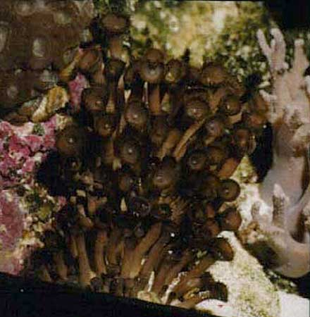 button-coral