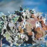 coral2 - Copy