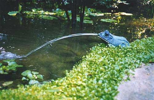frogfount