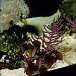 purplethn-150x150