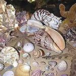 shells - Copy