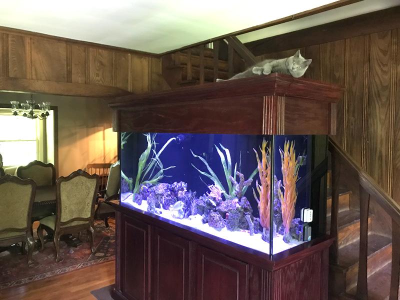 aquarium gallery aquatic interiors seacave